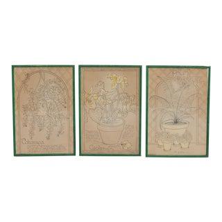 Original Framed Botanical Prints - Set of 3