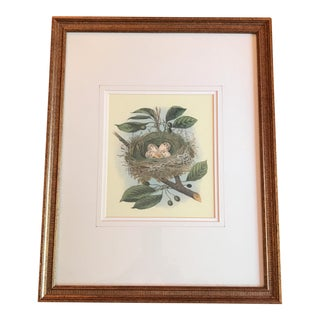 Vintage Bird Nest & Eggs Framed Print