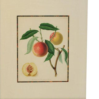 Exquisite Fruit Plate, 1820