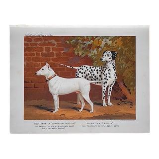 Antique Dog Bull Terrier & Dalmatian Lithograph