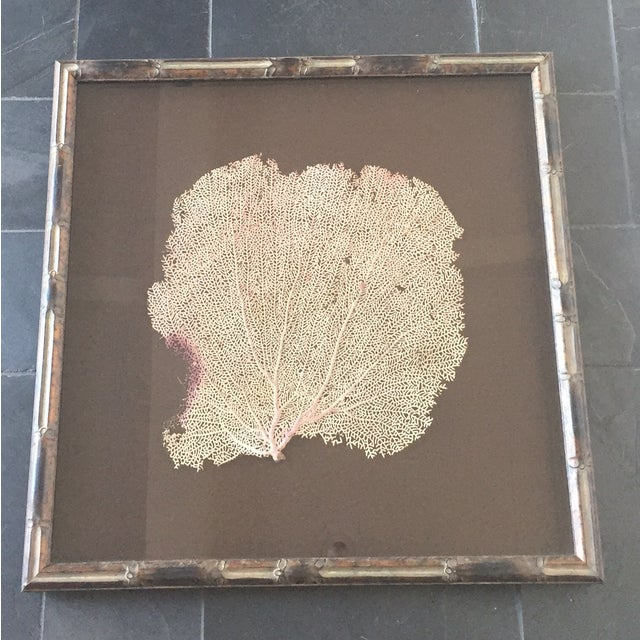 Coral Sea Fan in Bamboo Frame - Image 2 of 5