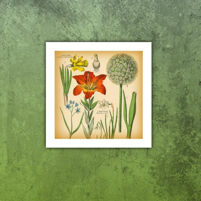 Antique Tiger Lily Botanical Archival Print - Image 3 of 4