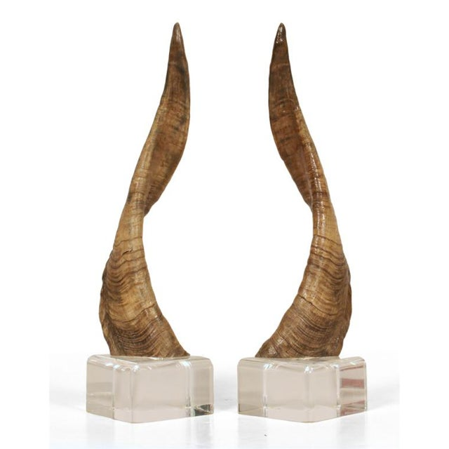 African Horns on Lucite Bases after Karl Springer - a Pair - Image 3 of 5