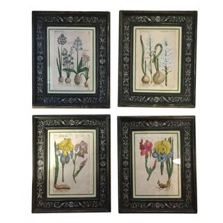 Hand Colored Copperplate Engravings - Set of 4