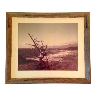 Mid-Century Original Coastal Framed Photography