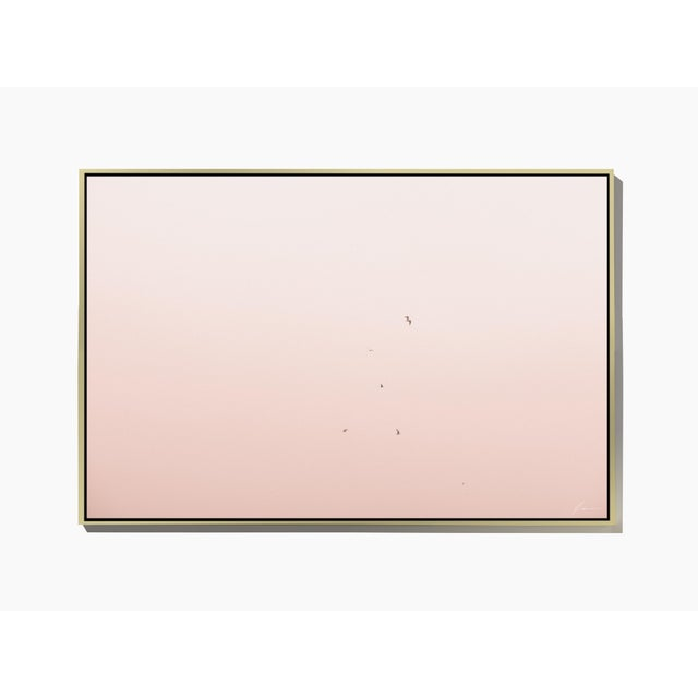 "Image of ""Pink Flight,"" Framed Photograph by Timothy Hogan"