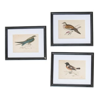 Antique Bird Lithographs - Set of 3