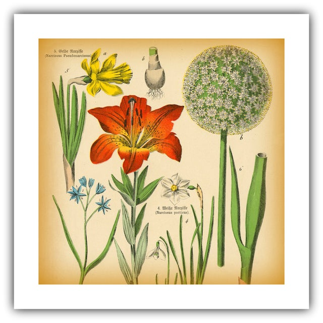 Antique Tiger Lily Botanical Archival Print - Image 2 of 4
