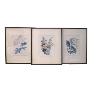 1940s Framed Botanical Prints - Set of 3