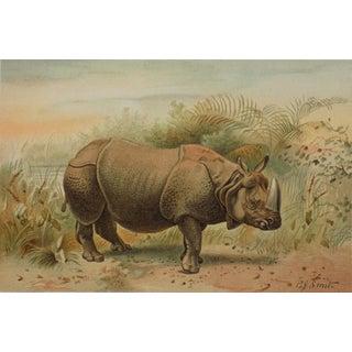 Indian Rhinoceros, 1895