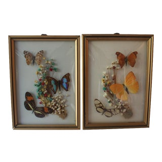 Vintage Framed Butterfly Specimens - A Pair