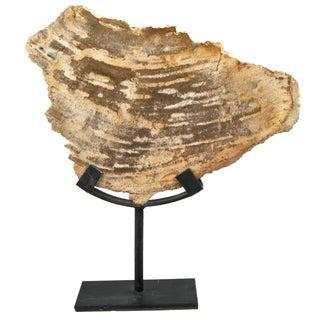 Petrified Wood Slice on Stand