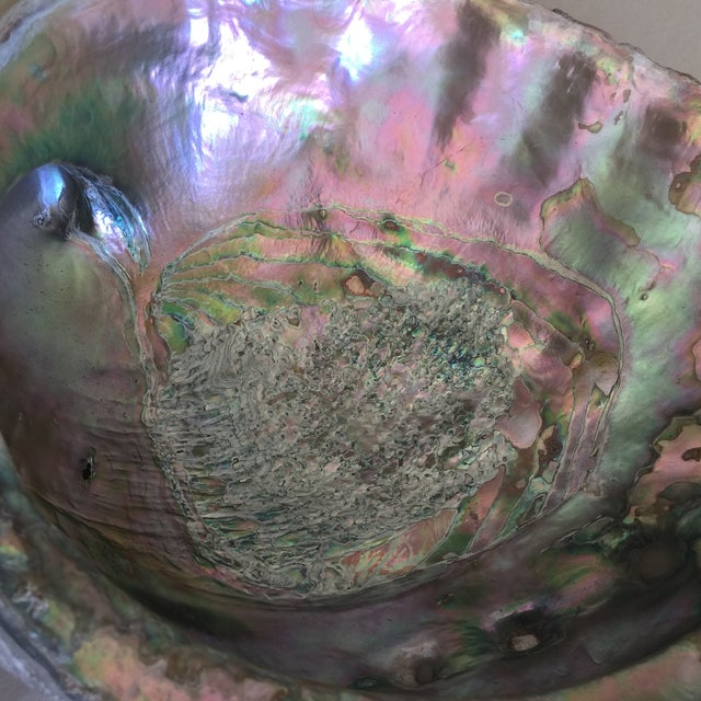 Natural Abalone Shell Bowl - Image 3 of 11