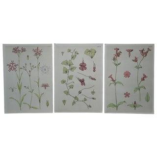 Antique Stylized Botanical Lithographs - Set of 3