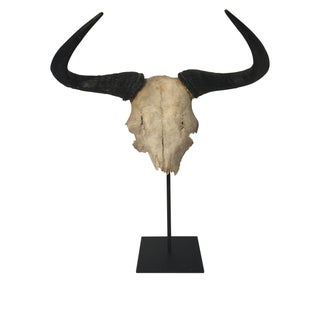 African Wildabeest Skull on Stand