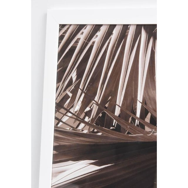 """""""Palm Helix"""" Diptych by Christine Ralphs - Image 3 of 4"""