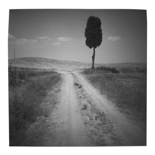 'Cypress Road' Toy Camera Photograph