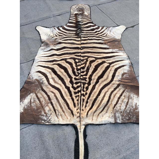 Vintage Zebra Hide Rug - Image 7 of 7