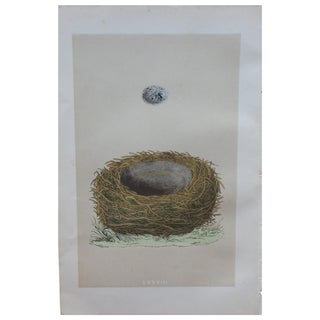 "1875 ""LXXVIII"" Birds Nest Engraving"
