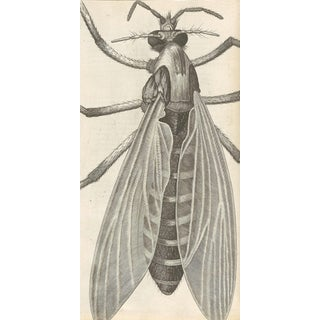 Traditional Illustrated Fly Print