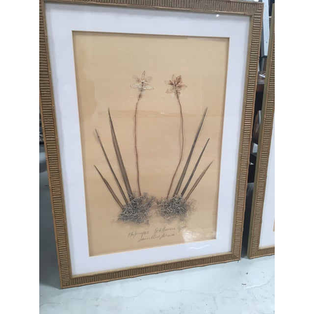 Faux Bamboo Framed Pressed Orchids - A Pair - Image 3 of 7