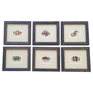 Hand-Colored Fish Engravings - Set of 6