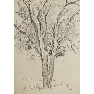 Tree Pencil Study by George Baer