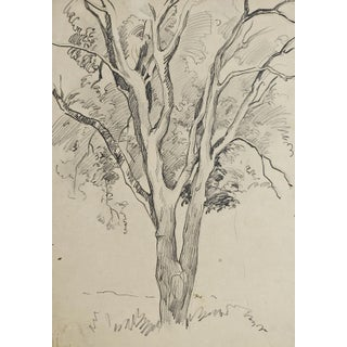 Tree Pencil Study by George Baer