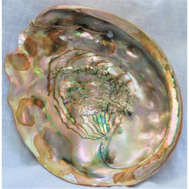 Image of Vintage Large Abalone Shell