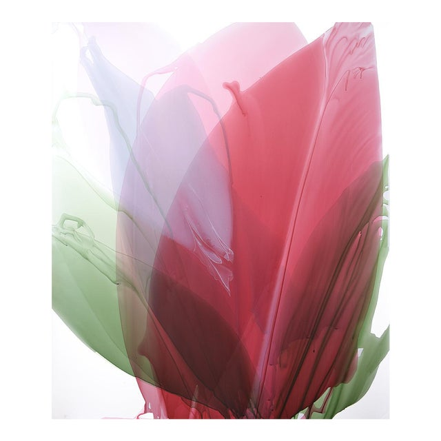 Limited Edition Print - Red Amaryllis - Image 1 of 3