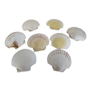 Natural Sea Shells - Set of 8