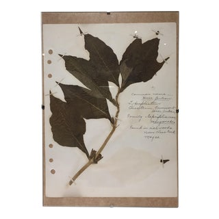 Vintage Horse Gentian Botanical Journal Page