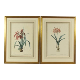 A Pair of Redoute Amaryllis Engravings