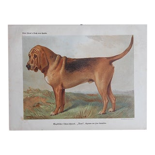 "Antique Dog Lithograph ""Bloodhound"""