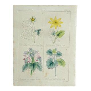 "1860 ""Plate 1"" Antique Print"