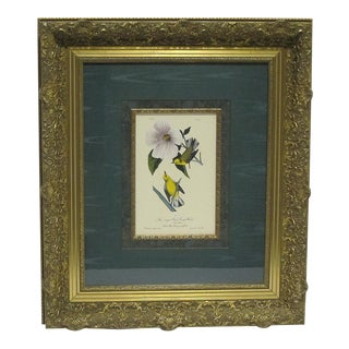 Sarreid Ltd. Framed Ornithology Print