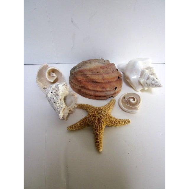 Coastal Collection Sea Shells Shell - Image 2 of 4