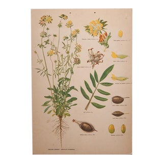French Yellow Botanical School Print