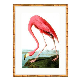 Soicher Marin Flamingo Gold Bamboo Framed Audubon Print