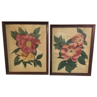 Vintage Framed Floral Prints - A Pair