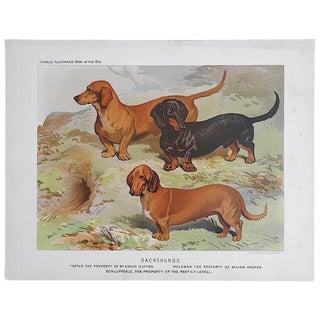 "Antique Dog Lithograph ""Dachshunds"""