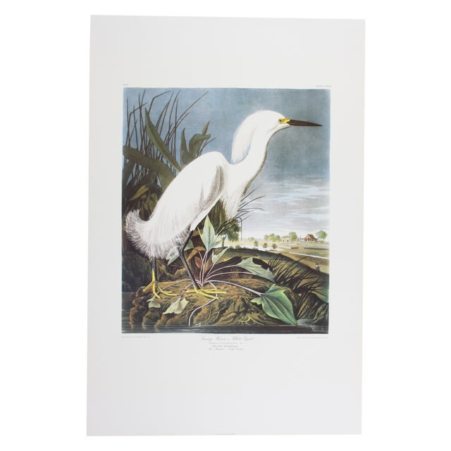 J. J. Audubon Snowy Heron Print - Image 1 of 4