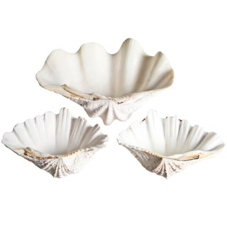 Vintage Seashell Serving Bowls - Set of 3