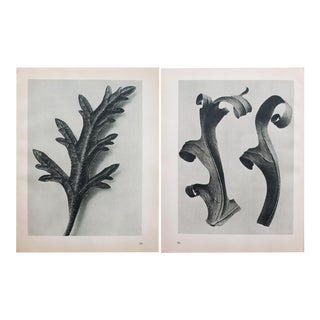 Karl Blossfeldt Two-Sided Black & White Photogravure N35-36