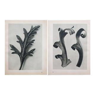 Karl Blossfeldt Two-Sided Black & White Photogravure N35-36