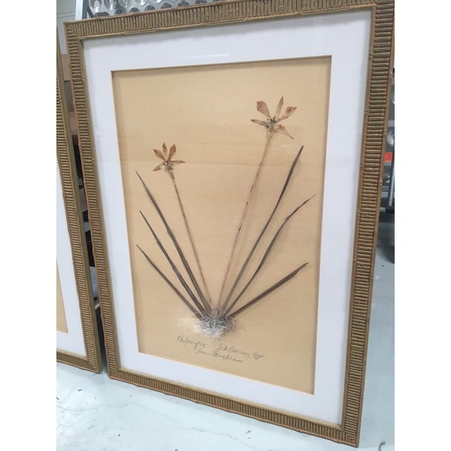 Faux Bamboo Framed Pressed Orchids - A Pair - Image 4 of 7