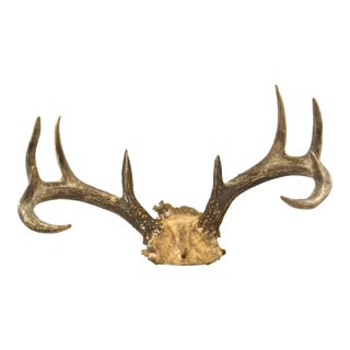 Natural 10-Point Deer Rack