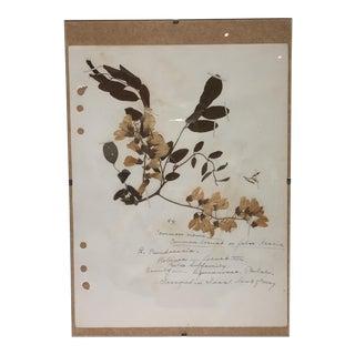 Vintage Acacia Botanical Journal Page