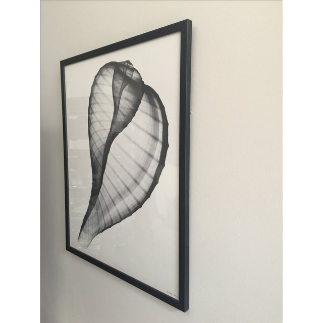 Image of Framed George Green X Ray Fig Shell Ficus Print