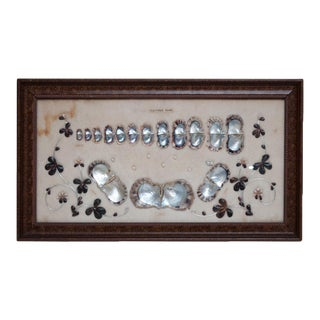 1920s Japanese Akoya Pearls Display
